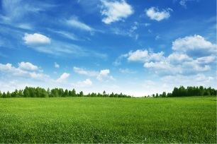 Green field and trees under blue sky.